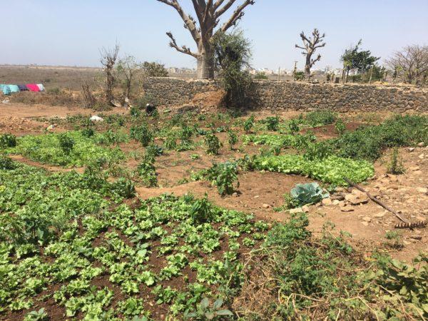 セネガルの農園