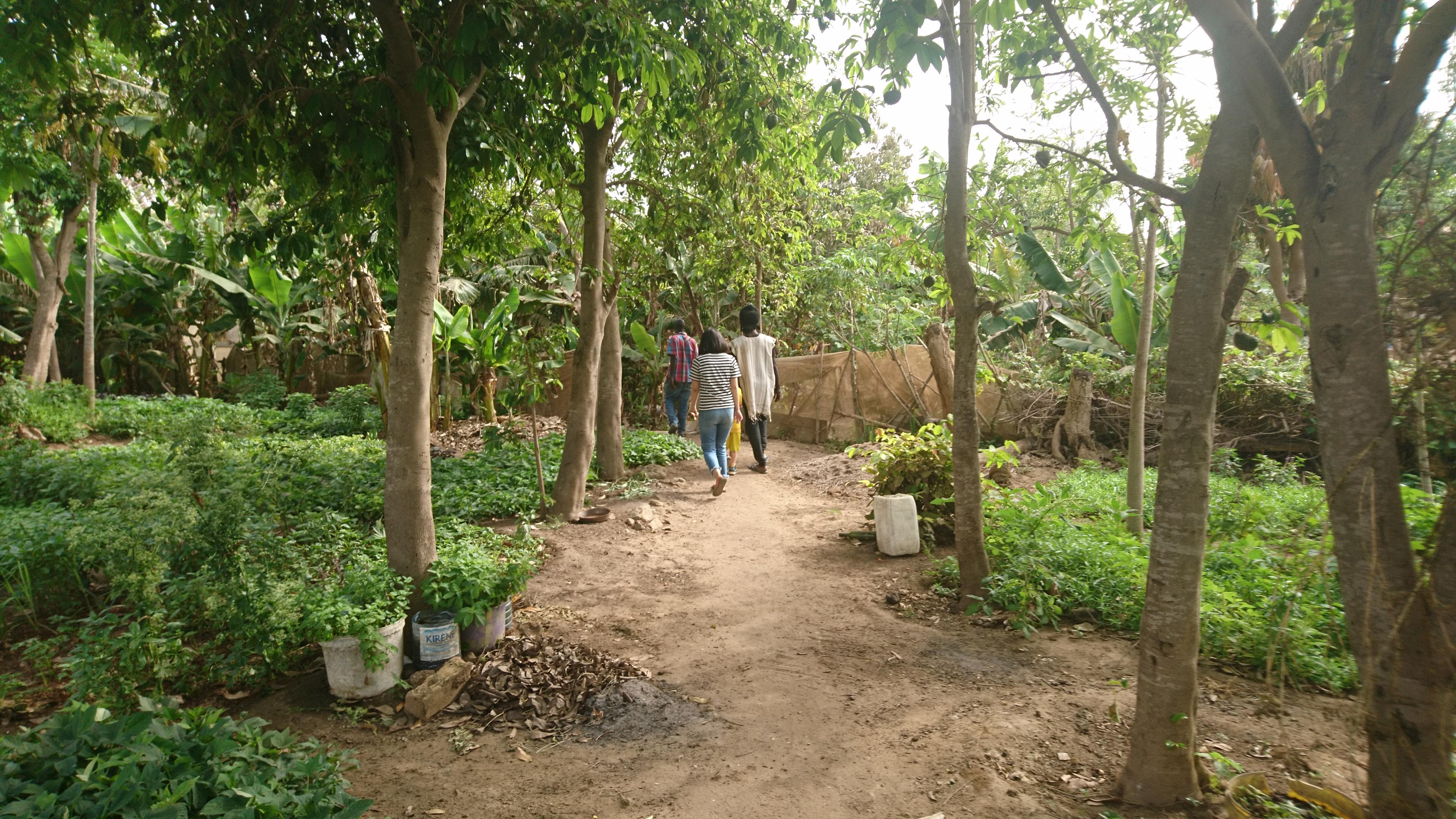 セネガル農家